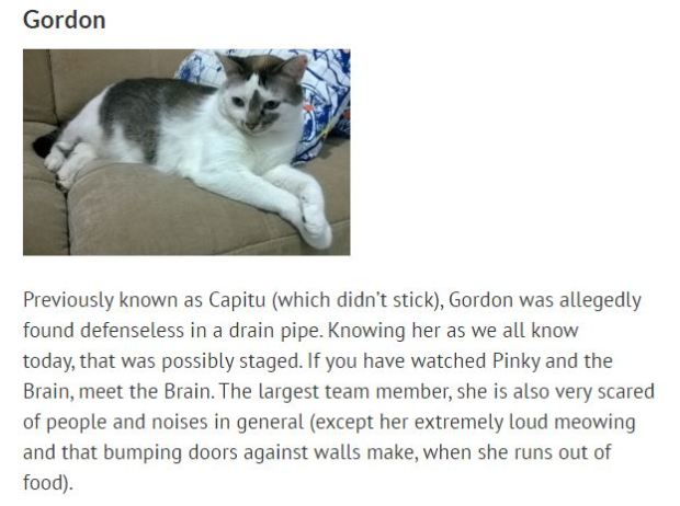 meettheteamgordon